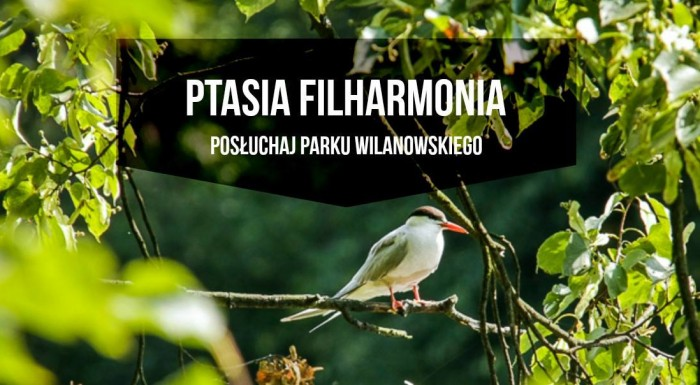 Bird philharmonic. Audio workshops for adults.