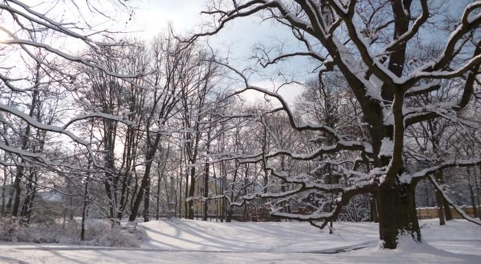 Flora w zimowej szacie