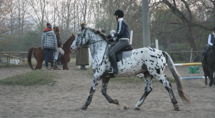 TKKF Hubert – horse riding