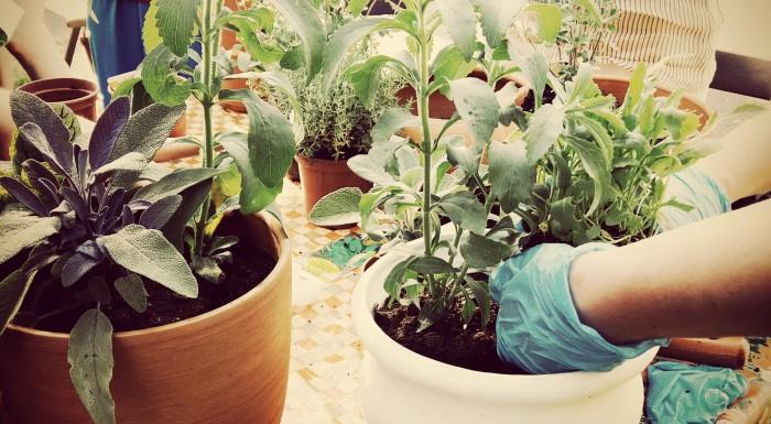 Projekt Topinambur – zostań miejskim ogrodnikiem