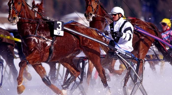 Alpejskie wyzwanie partynickich koni