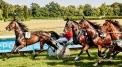 Wyścigi Konne - Partynice 2018