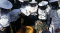 Beekeeping workshops
