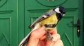 BIRDS, FIGURES, MEASURES – environmental and artistic workshop