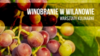 Grape Harvesting at Wilanów